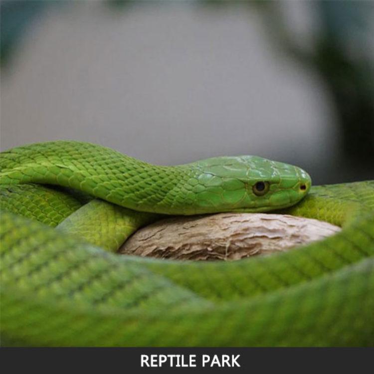 Reptile Park.