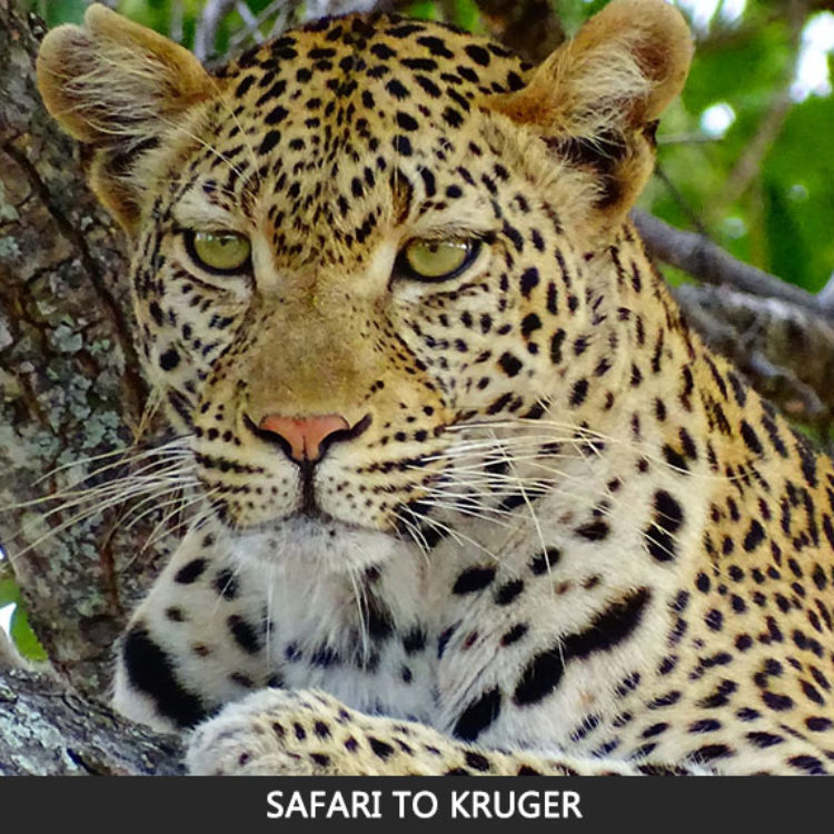 Safari to Kruger