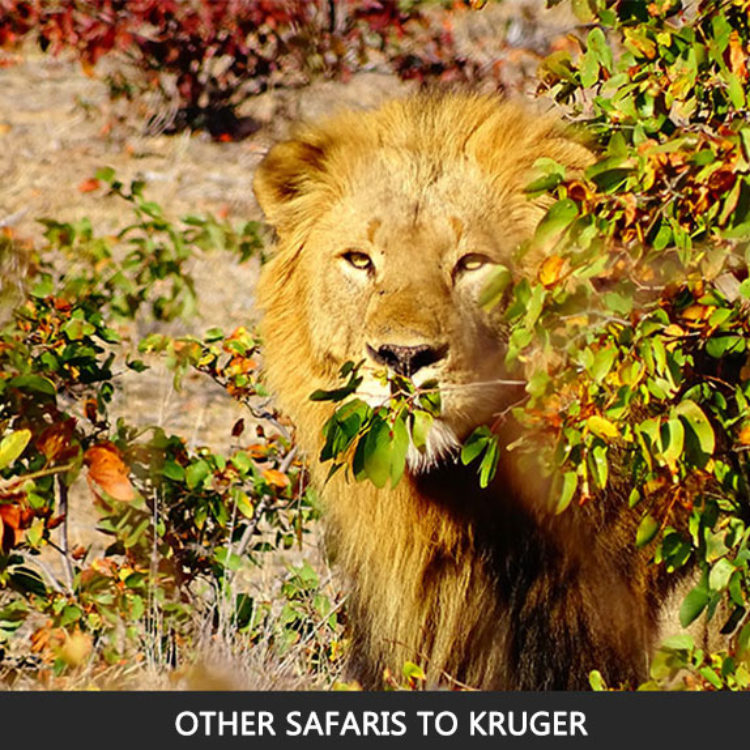 Other Excursions to Kruger