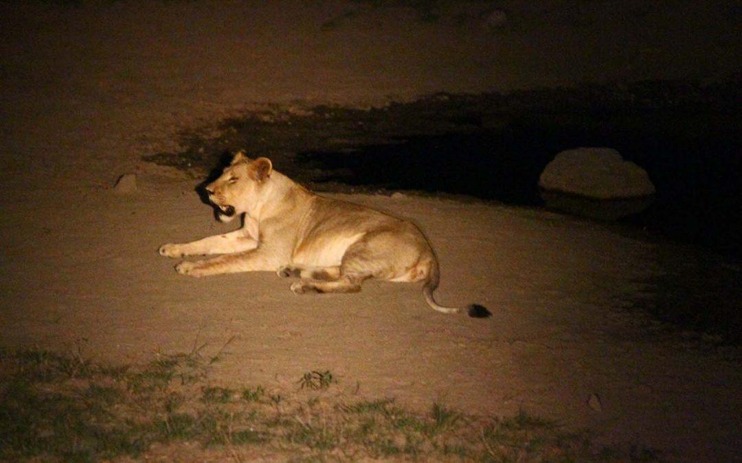 Night Safari and Bush Braai Exclusive