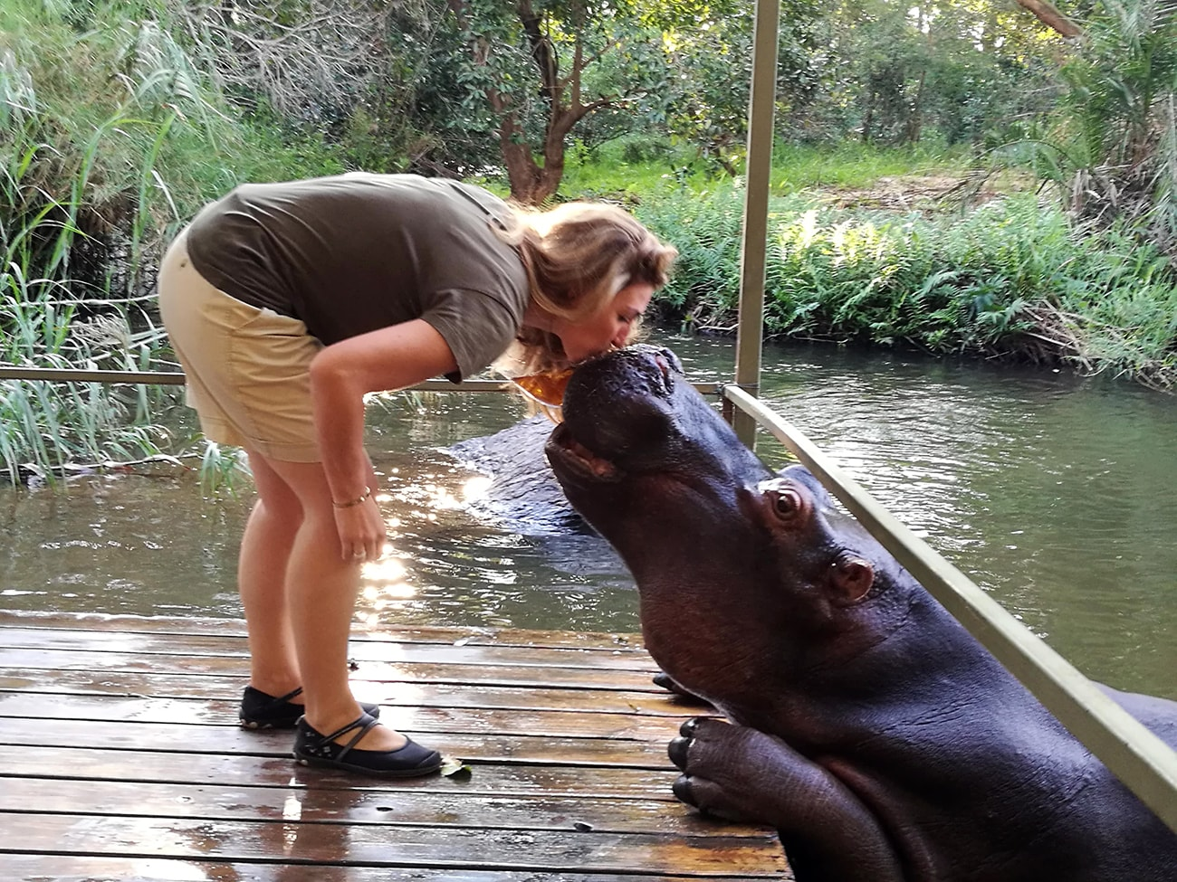 barbara kiss hippo